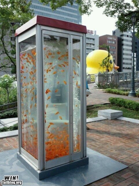Fish in a Phone Box